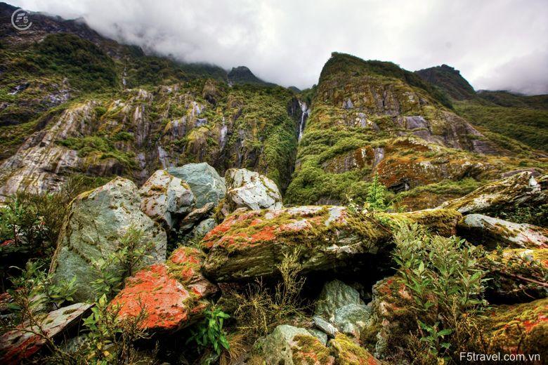 New zealand rainforest 780x520 - Tour du lịch khám phá New Zealand: Auckland – Christchurch - Queensland