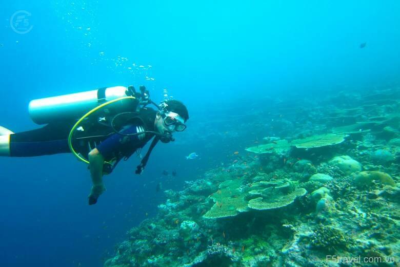 maldives diving 780x520 - Thiên đường nghỉ dưỡng Maldives 05N04Đ (Hàng không Singapore Airlines - resort 4 sao)